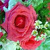Bride's Maid Bouquet
