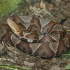 Copperhead Jigsaw