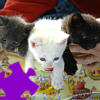 Cute Kittens Jigsaw