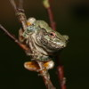 Gray Treefrog Jigsaw